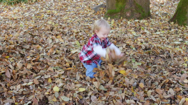 ms ts slo mo shot of toddler baby boy playing with leaves as he smiles and laughing / hillsboro, oregon, united states - tree trunk stock videos & royalty-free footage