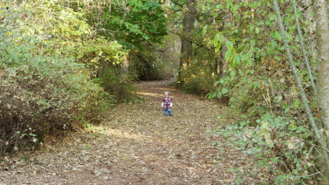 stockvideo's en b-roll-footage met ws shot of toddler baby boy walking down path by himself in woods / hillsboro, oregon, united states - one baby boy only