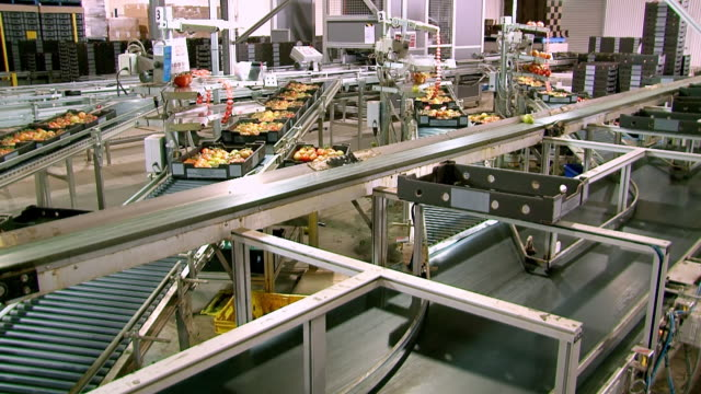 ms shot of tomato production line / two wells, south australia, australia - manufacturing machinery stock videos & royalty-free footage