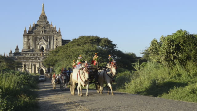 ms shot of tourists in oxcart drive past thatbyinnyu temple / bagan, mandalay division, myanmar - pagan stock-videos und b-roll-filmmaterial
