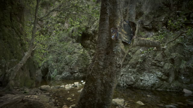 WS T/L Shot of tranquil river stream in deep gorge with green foliage / Greyton, Western Cape, South Africa