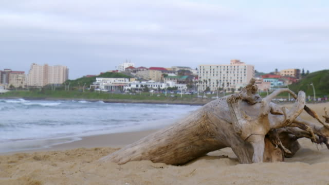 MS Shot of tree branch on beach / East London, Eastern Cape, South Africa