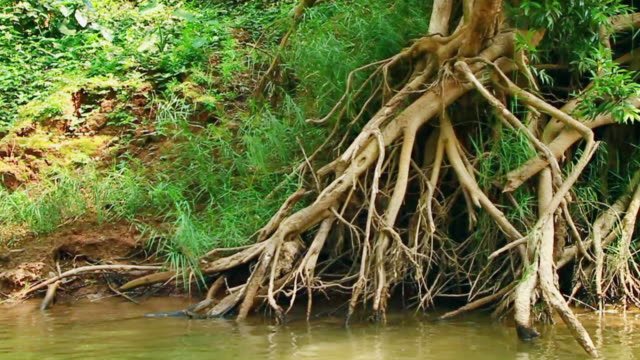 ms pov slo mo shot of tree roots with ends submerged in brownish river water / muang ngoi, luang prabang, laos - territorio video stock e b–roll