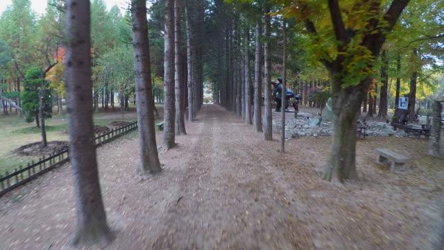vídeos de stock e filmes b-roll de shot of treelined at the namiseom island in the autumn - belveder