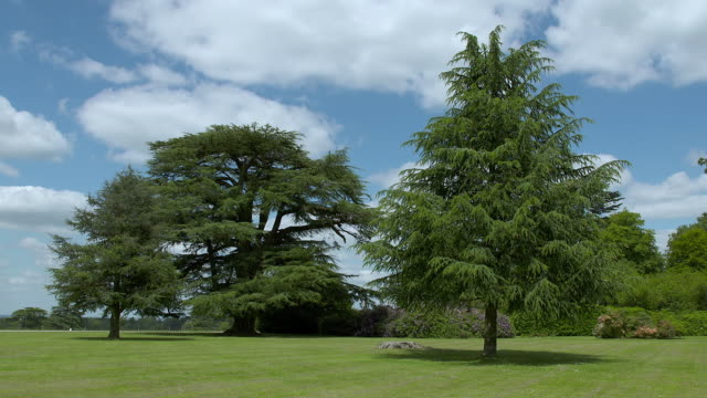 WS Shot of trees and opne grounds at Highclere Castle / Hampshire, United Kingdom