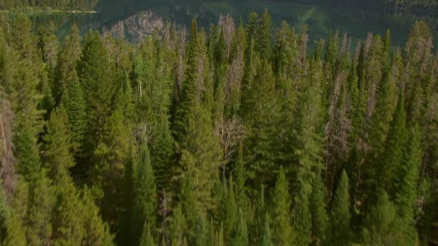 ms aerial tu shot of trees and phelps lake with tetons mountains in grand teton national park / jackson wyoming united states - grand teton national park stock videos & royalty-free footage