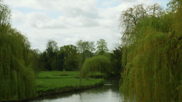 Shot of trees lining the River Cam, Cambridge.