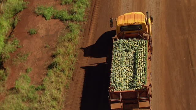 ms ts aerial shot of truck filling with pineapples pulling from dole pineapple fields on island of oahu / wahiawa, hawaii, united states - mezzo di trasporto video stock e b–roll