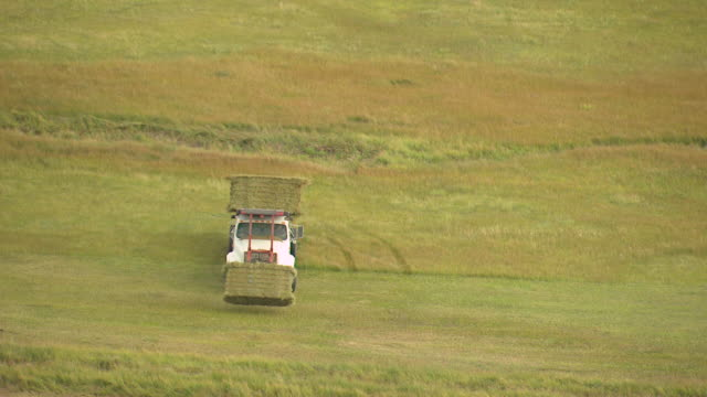 ms aerial shot of truck loading and moving with hay on farm located in flat plains in saguache county / colorado, united states - hay truck stock videos & royalty-free footage