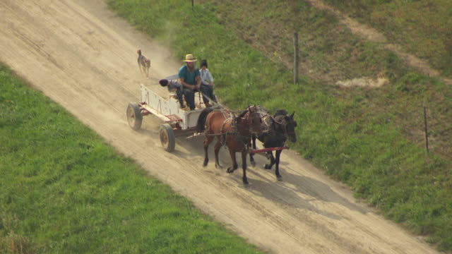 MS TS AERIAL Shot of two Amish men's riding horse drawn carriage on dirt road with dog running behind on rural area / Bergholz, Ohio, United States