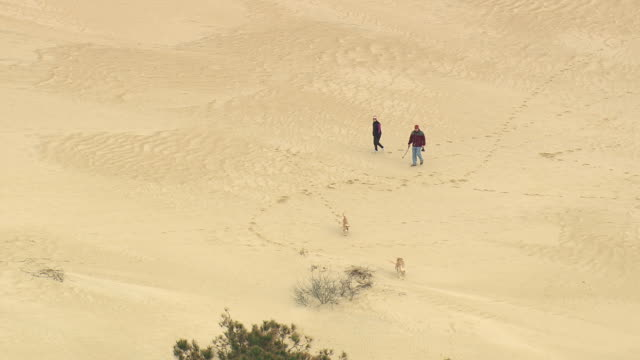 ms aerial zo shot of two dogs and people on jockey's ridge state park with houses on beach / north carolina, united states - ペット点の映像素材/bロール