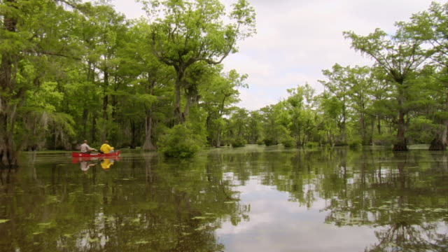 stockvideo's en b-roll-footage met ws pov shot of two men's paddling boat in long swampy river / manteo, north carolina, united states - wiese