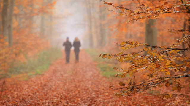 MS R/F Shot of two women walking through autumnal forest / Orscholz, Saarland, Germany