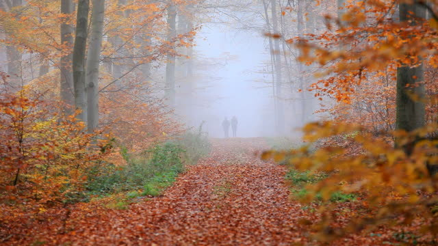 MS Shot of two women walking through autumnal forest / Orscholz, Saarland, Germany