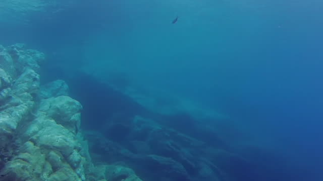 MS PAN TU Shot of Underwater footage of rocky ocean floor where Costa Concordia accident happened / Giglio Porto, Tuscany, Italy