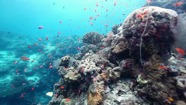 MS Shot of Underwater scenery / Sipadan, Semporna, Tawau, Malaysia