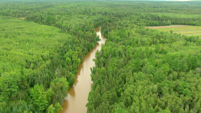 ms aerial shot of upper peninsula forest and creek in mackinac county  / michigan, united state - michigan stock videos & royalty-free footage