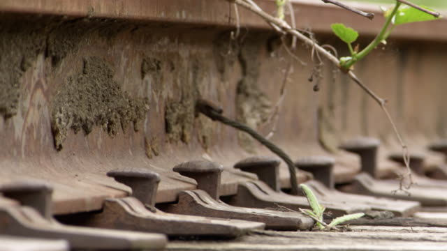 CU Shot of vegetation growing through abandoned train tracks / Greensboro, North Carolina, United States