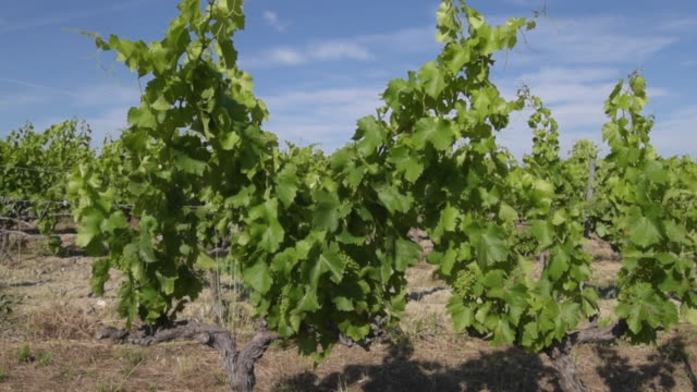 td shot of vineyard - luberon stock-videos und b-roll-filmmaterial