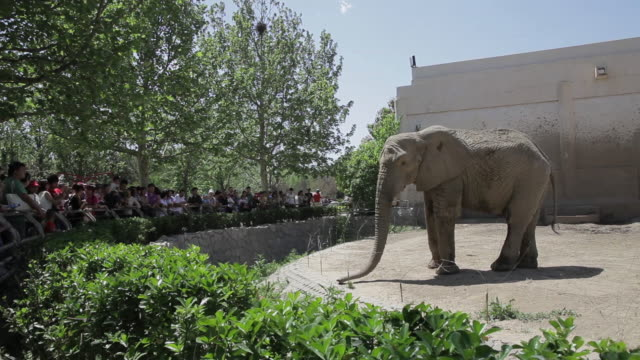 stockvideo's en b-roll-footage met ws shot of visitors watching elephant in zoo / beijing, china - dierentuin