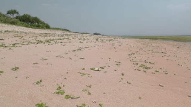 ビーチの上を歩くのpov。 - 干潮点の映像素材/bロール