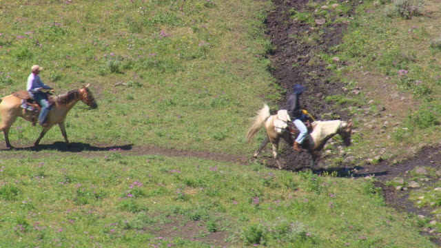 ms aerial shot of walking pony trekkers / wyoming, united states - trail ride stock videos and b-roll footage