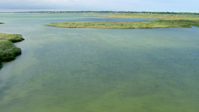 vidéos et rushes de ms aerial shot of water and coastline with reeds in saginaw bay / michigan, united state - michigan