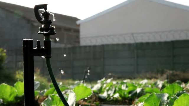 ms shot of water drips from a sprinkler in a community garden in khayelitsha township / cape town, south africa - vattenspridare bildbanksvideor och videomaterial från bakom kulisserna