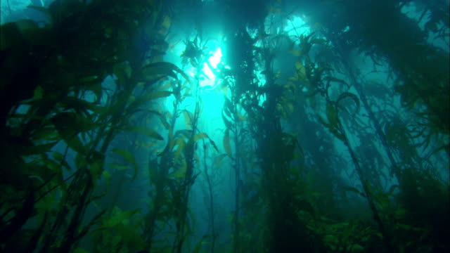 Shot of water plants under Antarctic Ocean