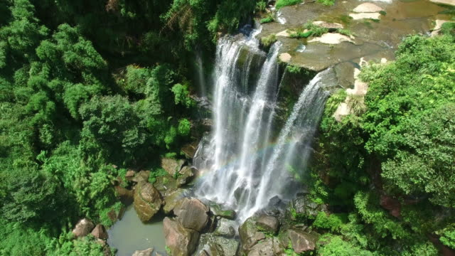vídeos de stock e filmes b-roll de ws aerial shot of waterfall in bamboo sea of yibin,sichuan in morning,china. - bamboo plant