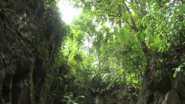 MS TD Shot of Waterfall in jungle / Kota Kinabalu, Sabah, Malaysia