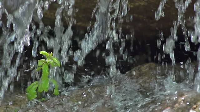MS SLO MO Shot of Waterfall with plant / Ribeauville, Alsace, France
