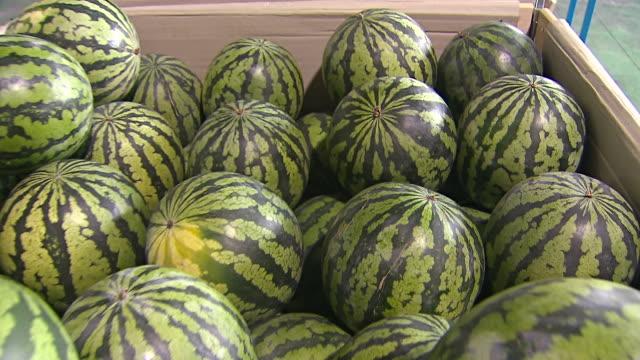 CU ZI Shot of Watermelons filling boxes / Chungcheongnamdo, South Korea