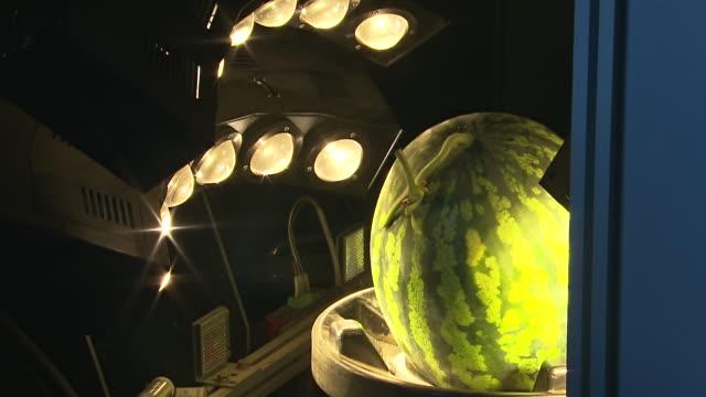 vídeos de stock, filmes e b-roll de cu shot of watermelons moving by conveyer belt through light equipment / chungcheongnamdo, south korea - quatro objetos