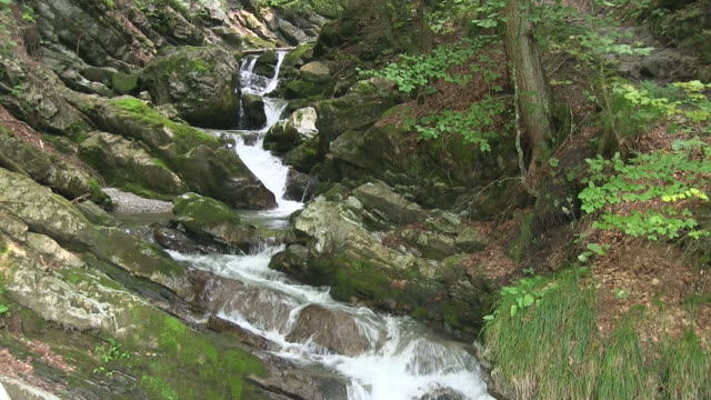 MS Shot of waters of mountain brook flowing among stones and forest area at Allgau Alps / Oberstdorf, Bavaria, Germany
