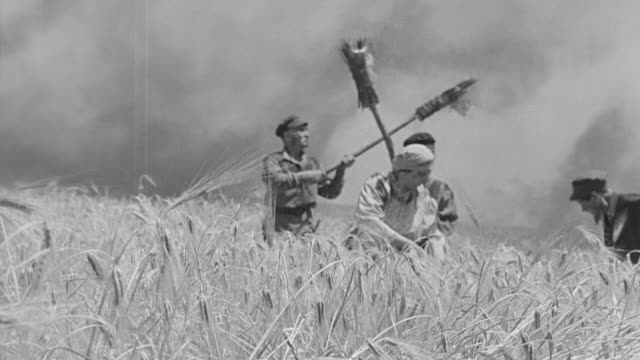 WS PAN Shot of Wheat field with hills in distance as peasants set fire to field