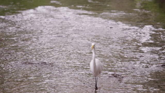 shot of white egret-looking bird wading in water in brazil. - water bird stock videos & royalty-free footage