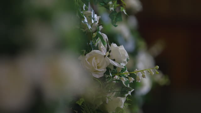 cu r/f pan shot of white roses / edinburgh, united kingdom - bunch stock videos and b-roll footage