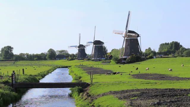 ws shot of windmills near leidschendam with animal grazing / south holland, netherlands - south holland stock videos and b-roll footage