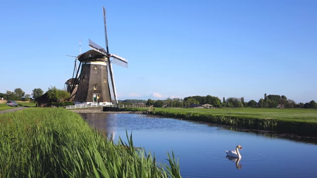 ws shot of windmills near leidschendam with duck swimming in small pond / south holland, netherlands - dutch culture stock videos and b-roll footage