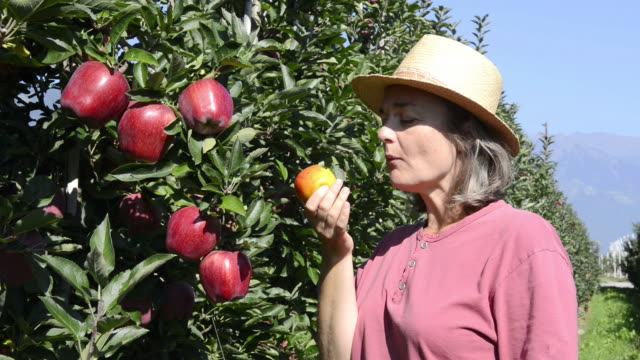 ms shot of woman eating red apple / merano, trentino, south tyrol, italy - organic stock videos & royalty-free footage