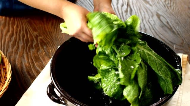 Shot of woman hands washing Gat (leaf mustard) to make Gat kimchi (Popular traditional fermented Korean side dish)