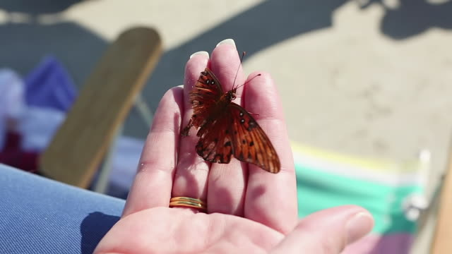 vidéos et rushes de cu shot of woman holding butterfly in hand / st. simons island, georgia, united states - fragilité