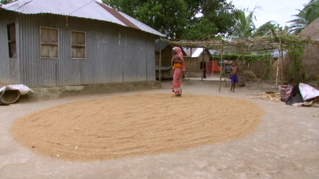 ws shot of woman in red sari holding her child as she smoothes rice grains out on ground with her bare feet / pabna, bangladesh - bangladeshi culture stock videos & royalty-free footage