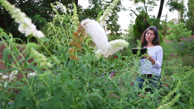ms pan shot of woman sketching in her garden / lamy, new mexico, united states - lamy new mexico stock videos and b-roll footage