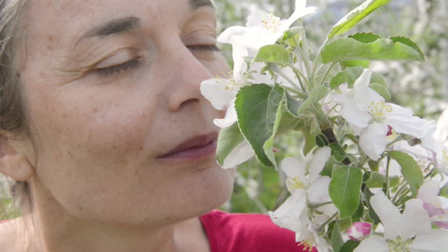 CU Shot of Woman smelling apple blossoms / Merano, South Tyrol, Italy