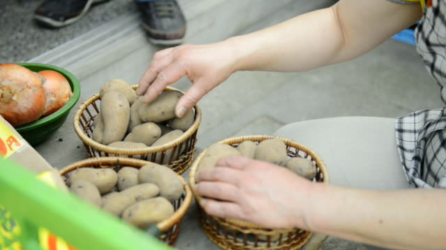 ms shot of women greengrocer is touching potatoes / toyooka, hyogo, japan - lebensmittelhändler stock-videos und b-roll-filmmaterial