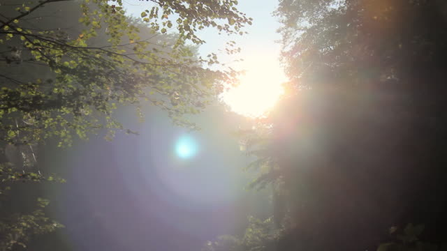 MS TU Shot of woods and lens flare / Hachioji, Tokyo, Japan