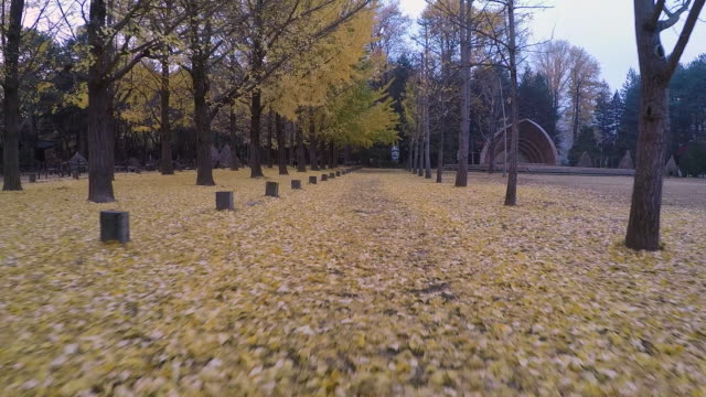 vídeos de stock, filmes e b-roll de shot of yellow ginkgo trees in a row and fallen ginkgo leaves at the namiseom island in the autumn - eco tourism