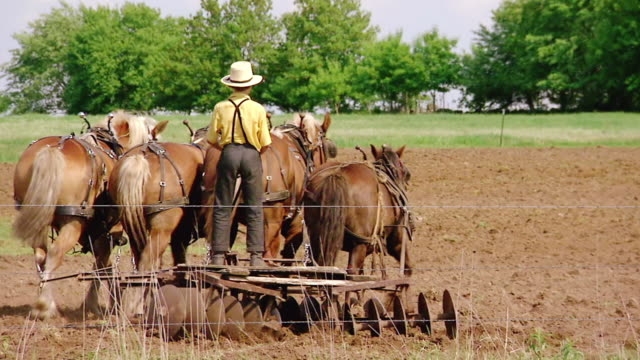 ms ts shot of young amish boy working with horse drawn plough / kingston, wisconsin, united states - pflug stock-videos und b-roll-filmmaterial